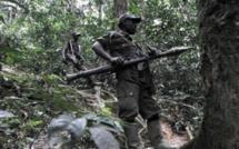 RDC: l'ONU plaide pour une reddition sans combat des FDLR