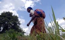 RDC: questionnements autour du sort des ADF-Nalu et de leurs otages