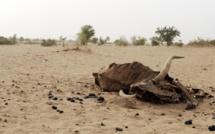 Au Niger, les éleveurs attendent la pluie qui tarde à venir