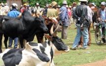 Madagascar: deux gendarmes et treize dahalos tués dans des accrochages