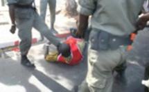 Kolda: 35 personnes interpellées pour détention et trafic de chanvre indien