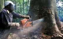 RDC : environnement