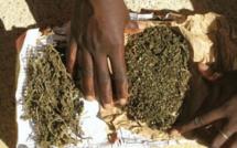 Thiès : 70 Kg de chanvre saisis par la police